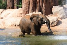 Free African Elephants Royalty Free Stock Photo - 20990105