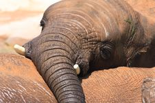 Free African Elephants Stock Photography - 20990142