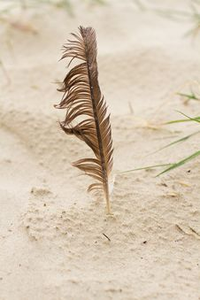 Free Feather On The Beach Stock Photography - 20990322