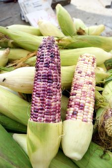 Free Corn Stock Image - 20990951