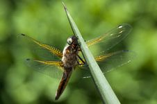Free Dragonfly Stock Photos - 20991553