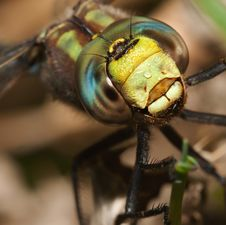 Free Colorful Dragonfly Stock Images - 20992834