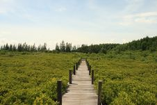 Free Wood Bridge In The Mangrove Royalty Free Stock Image - 20993316