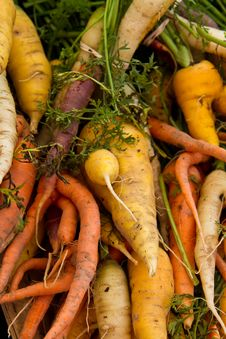 Free Colorful Carrots Stock Photo - 20994350