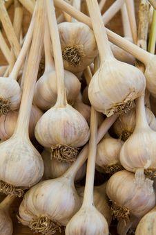 Free Garlic Bulbs Stock Photo - 20994500