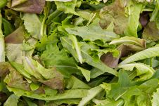 Free Salad Mix Royalty Free Stock Photo - 20994545