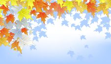Free Autumn Leaves On Blue Background Royalty Free Stock Photo - 20995315