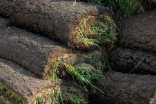 Free Lawn Turf Rolls Stock Photos - 20996373