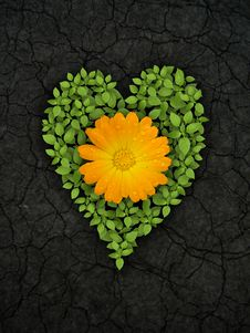 Free Green Heart On Cracked Soil Stock Images - 20999174