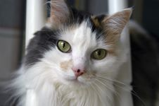 Free Housecat Stock Photography - 211862