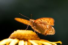 Free Orange Butterfly Stock Photos - 212203