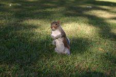 Free Squirrel Stock Photo - 212450