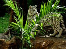 Free Tiger Stock Photos - 218273