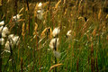 Free Close Up Of Grass In The Breeze Stock Photography - 2101252
