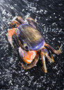 Free Crab In The Rain Stock Photo - 2104520
