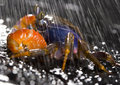 Free Crab In The Rain Royalty Free Stock Photos - 2104558
