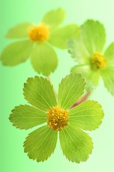 Free Detail Of Green Flower Stock Photos - 2100923
