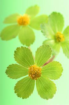 Free Detail Of Green Flower Stock Photos - 2100923
