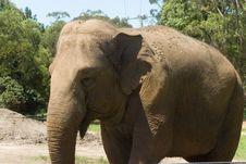 Free Elephant Royalty Free Stock Photos - 2100948