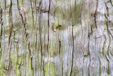 Free Old Tree Texture Royalty Free Stock Photography - 2101357