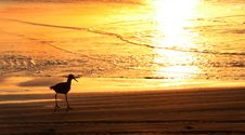Free Sea Gull Walking On The Sand Stock Images - 2103444