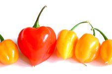 Chilis Stock Photo