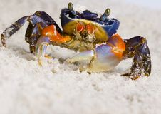 Free The Crab On The Sand Stock Photo - 2104280