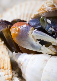 Free The Crab With The Shells Royalty Free Stock Images - 2104299