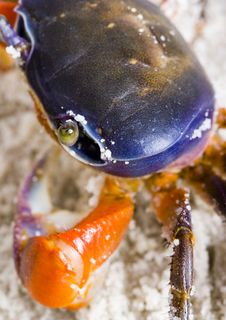 Free The Crab On The Sand Stock Images - 2104304