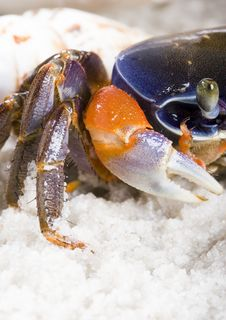Free The Crab On The Sand Stock Photo - 2104310