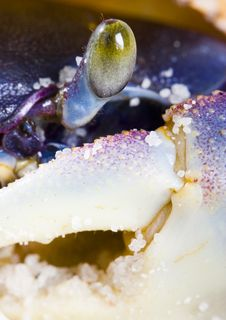 Free Crab Stock Photos - 2104313