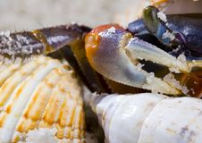 Free The Crab With The Shells Royalty Free Stock Image - 2104316