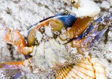 Free The Crab With The Shells Royalty Free Stock Photography - 2104317