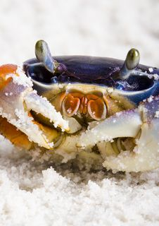 Free The Crab On The Sand Royalty Free Stock Photos - 2104318
