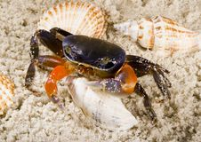 Free Crab Royalty Free Stock Images - 2104359