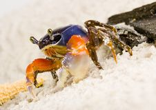 Free Crab Royalty Free Stock Photos - 2104368
