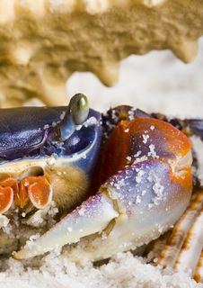 Free The Crab With The Shells Stock Photo - 2104380