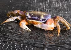 Free Crab In The Rain Royalty Free Stock Images - 2104429