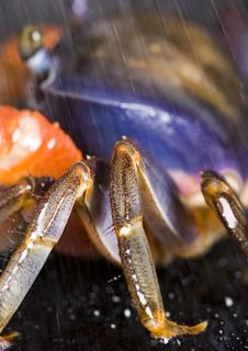 Free Crab Royalty Free Stock Photo - 2104435