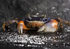 Free Crab In The Rain Stock Photo - 2104460