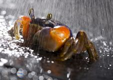 Free Crab In The Rain Stock Photo - 2104500