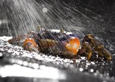 Free Crab In The Rain Royalty Free Stock Images - 2104509