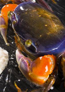 Free Crab Stock Image - 2104521