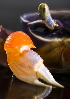 Free Crab Stock Photos - 2104523