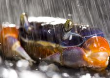 Free Crab In The Rain Stock Photo - 2104550