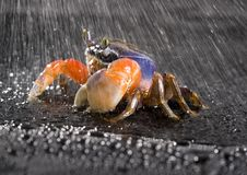 Free Crab In The Rain Stock Photo - 2104560