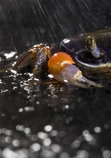 Free Crab In The Rain Stock Photography - 2104562