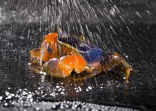 Free Crab In The Rain Stock Photography - 2104582
