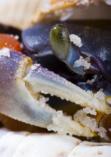 Free The Crab With The Shells Royalty Free Stock Images - 2104589