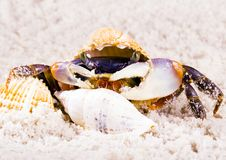 Free The Crab With The Shells Stock Photos - 2104593